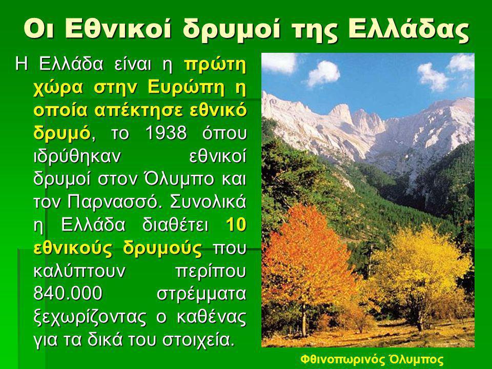 Οι Εθνικοί δρυμοί της Ελλάδας Η Ελλάδα είναι η πρώτη χώρα στην Ευρώπη η οποία απέκτησε εθνικό δρυμό, το 1938 όπου ιδρύθηκαν εθνικοί δρυμοί στον Όλυμπο και τον Παρνασσό.