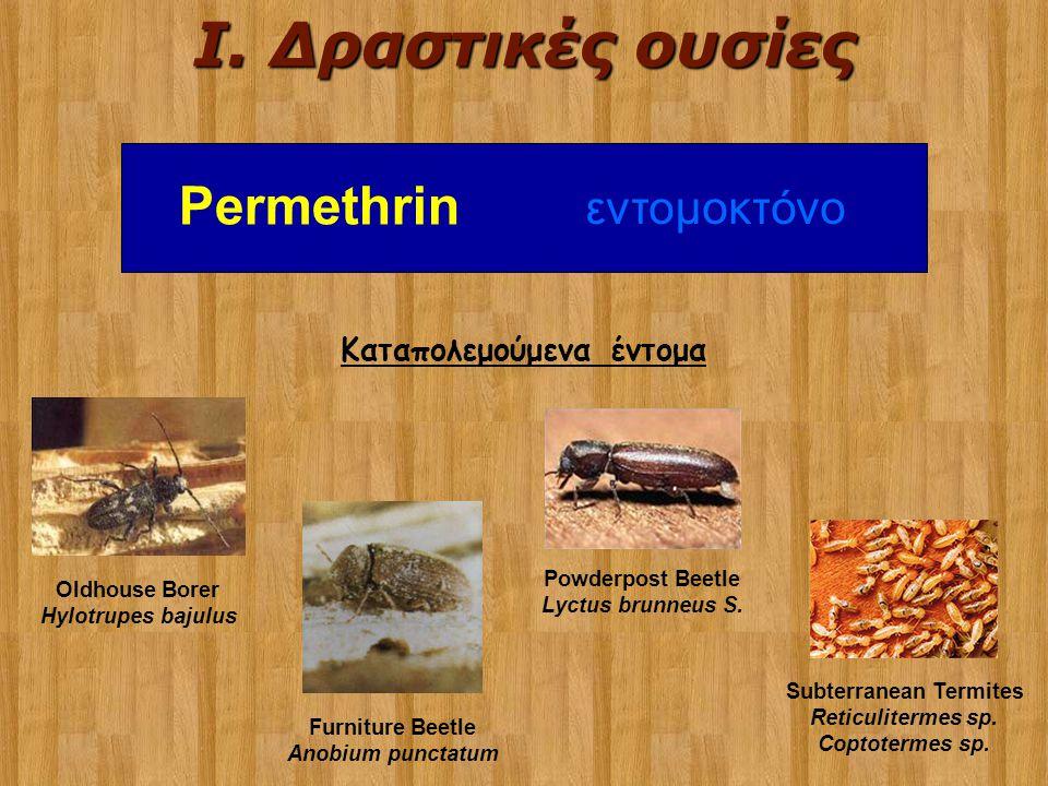 Καταπολεμούμενα έντομα Oldhouse Borer Hylotrupes bajulus Furniture Beetle Anobium punctatum Powderpost Beetle Lyctus brunneus S. Subterranean Termites