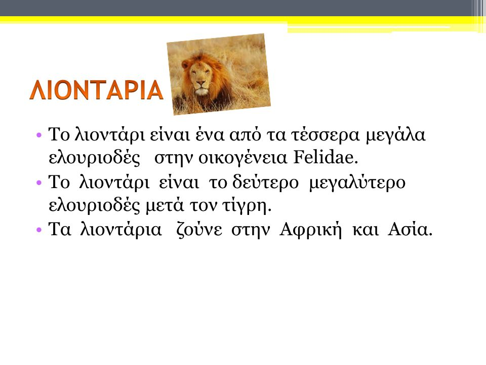 The lion is one of the four big cats of the family Felidae.