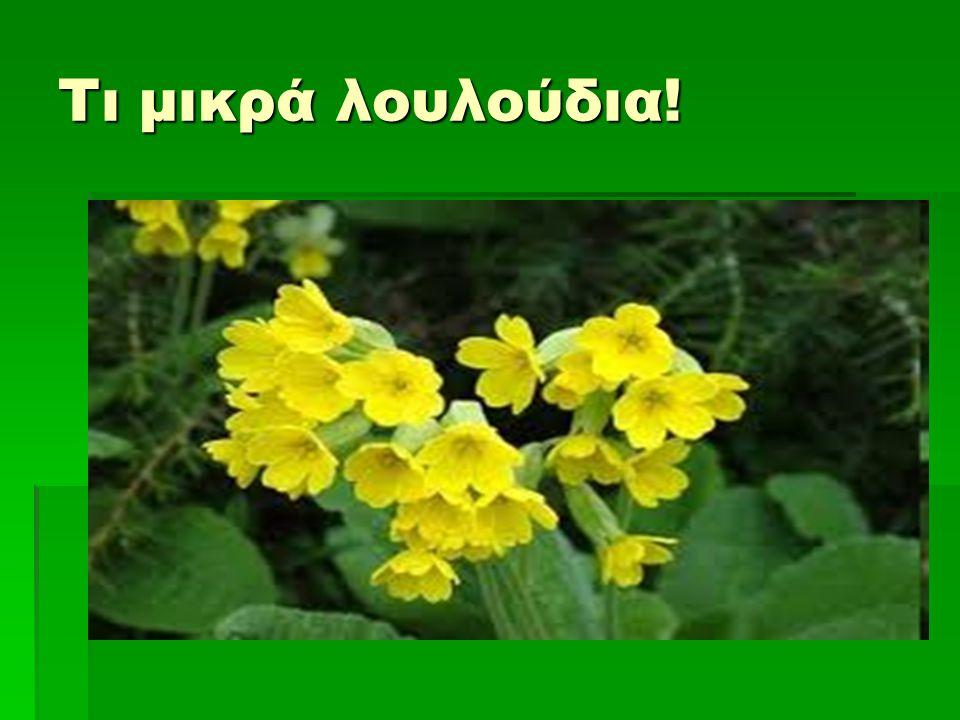 Τι μικρά λουλούδια!