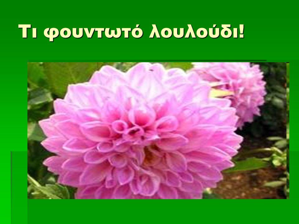 Τι φουντωτό λουλούδι!