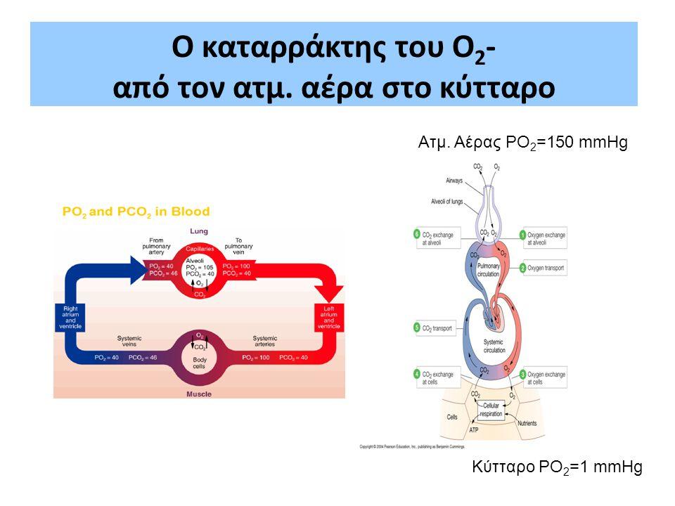 Ο καταρράκτης του Ο 2 - από τον ατμ. αέρα στο κύτταρο Ατμ. Αέρας PO 2 =150 mmHg Κύτταρο PO 2 =1 mmHg