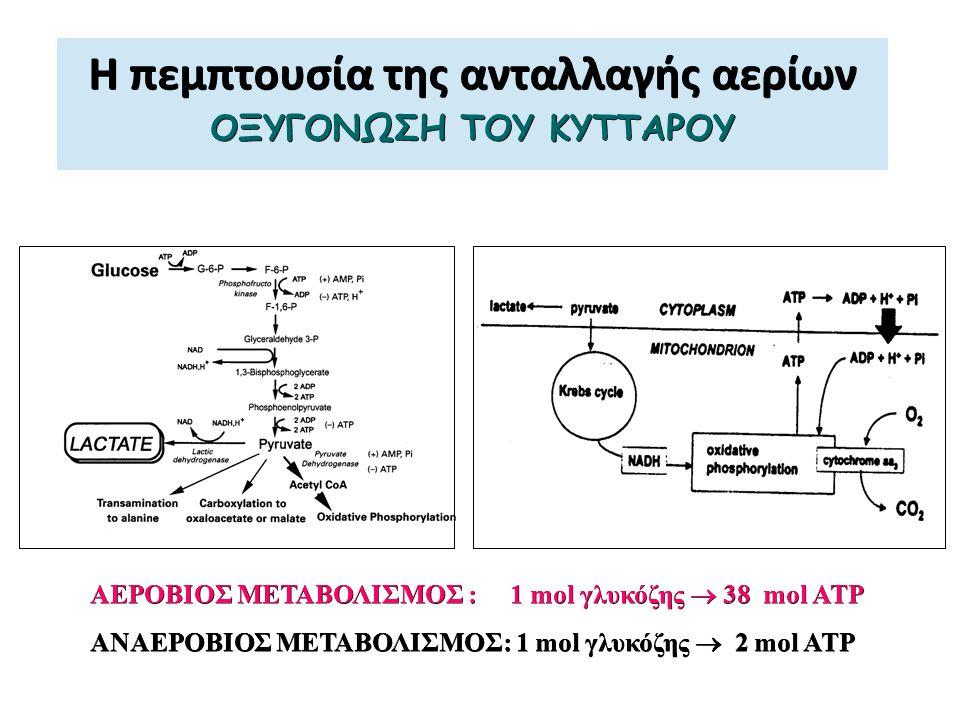 Η πεμπτουσία της ανταλλαγής αερίων ΟΞΥΓΟΝΩΣΗ ΤΟΥ ΚΥΤΤΑΡΟΥ ΑΕΡΟΒΙΟΣ ΜΕΤΑΒΟΛΙΣΜΟΣ : 1 mol γλυκόζης  38 mol ATP ΑΝΑΕΡΟΒΙΟΣ ΜΕΤΑΒΟΛΙΣΜΟΣ: 1 mol γλυκόζης