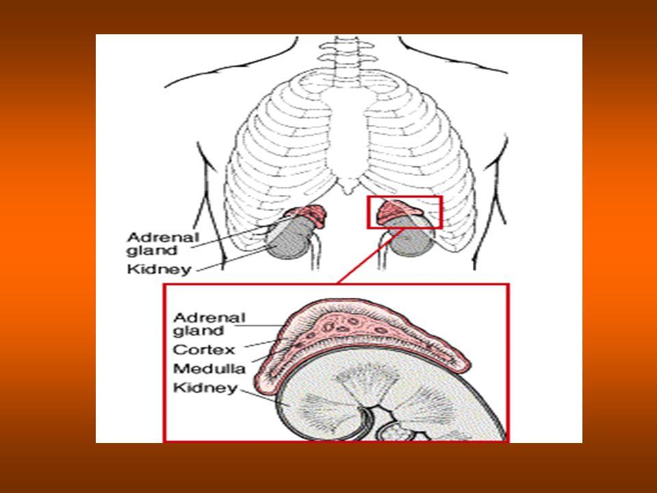 ΦΥΣΙΟΛΟΓΙΑ ΑΛΔΟΣΤΕΡΟΝΗΣ: μέση ημερήσια έκκριση της αλδοστερόνης κυμαίνεται μεταξύ 0.1 και 0.7 μmol (50-250 μg) 75% της αλδοστερόνης αδρανοποιείται με καταβολισμό του Α δακτυλίου του μορίου της και σύζευξή του με γλυκουρονίδιο κλάσμα ελεύθερης αλδοστερόνης σε χαμηλό pH ( acid- labile) 15-50 nmol (5-19μg ) συζευγμένου με γλυκουρονίδιο παραγώγου μεταξύ 70- 100 nmol μη συζευγμένης ελεύθερης αλδοστερόνης μεταξύ 0.5-2 nmol ( 0.2-0.6 μg).