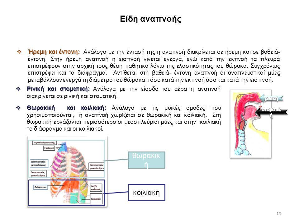 Είδη αναπνοής 19  Ήρεμη και έντονη:  Ήρεμη και έντονη: Ανάλογα με την έντασή της η αναπνοή διακρίνεται σε ήρεμη και σε βαθειά- έντονη. Στην ήρεμη αν