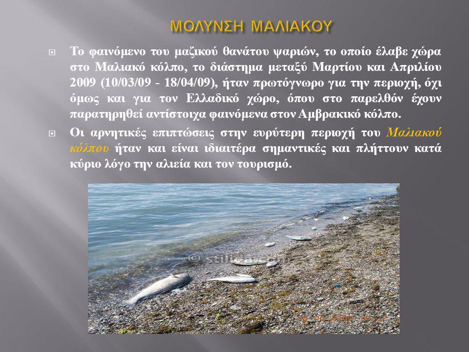 - μουρμούρες (Lithognafhus mormyrus), - σπάροι (Diplodus annularis), - τσιπούρες (Sparus aurata), - αθερίνες (Atherina spp.), - μυλοκόπια (Umbrina cirrosa) κυρίως μεγάλου μεγέθους, - φρύσσες (Sardinelto aunta) - λιθρίνια (Pagellus erythrinus), - σκιοί (Sciaena umbra), - κέφαλοι (Mugil cephalus).