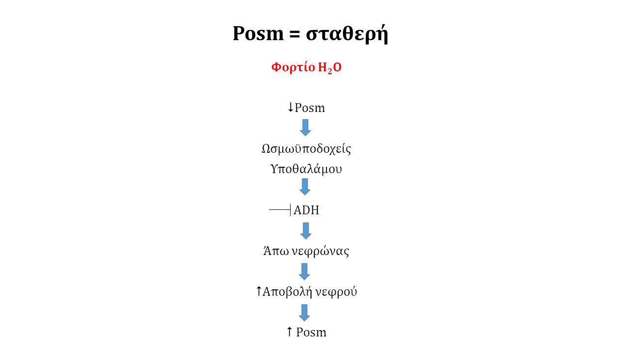 Posm = σταθερή Στέρηση ή απώλεια Η 2 Ο Posm Ωσμωϋποδοχείς Υποθαλάμου ADH Δίψα Άπω νεφρώνας Πρόσληψη νερού Αποβολή νεφρού Posm