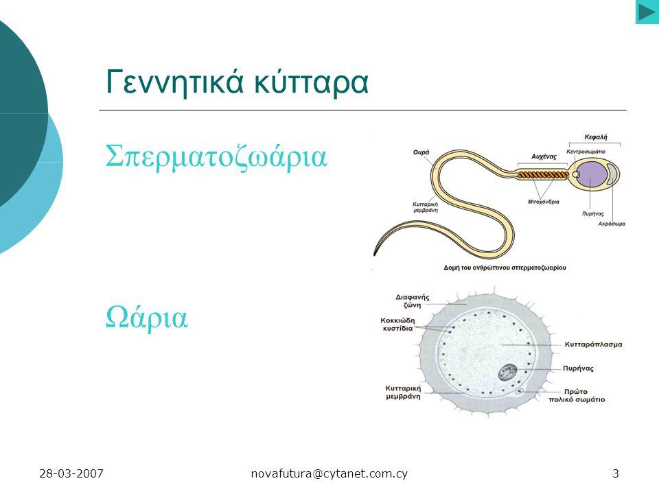 3novafutura@cytanet.com.cy28-03-2007 Γεννητικά κύτταρα Σ π ερματοζωάρια Ωάρια