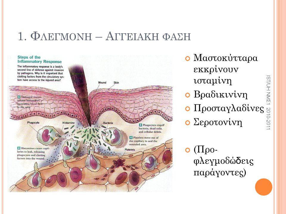 1. Φ ΛΕΓΜΟΝΗ – Α ΓΓΕΙΑΚΗ ΦΑΣΗ Μαστοκύτταρα εκκρίνουν ισταμίνη Βραδικινίνη Προσταγλαδίνες Σεροτονίνη (Προ- φλεγμοδώ δ εις παράγοντες) IST/UH ΝΜΣ1 2010-