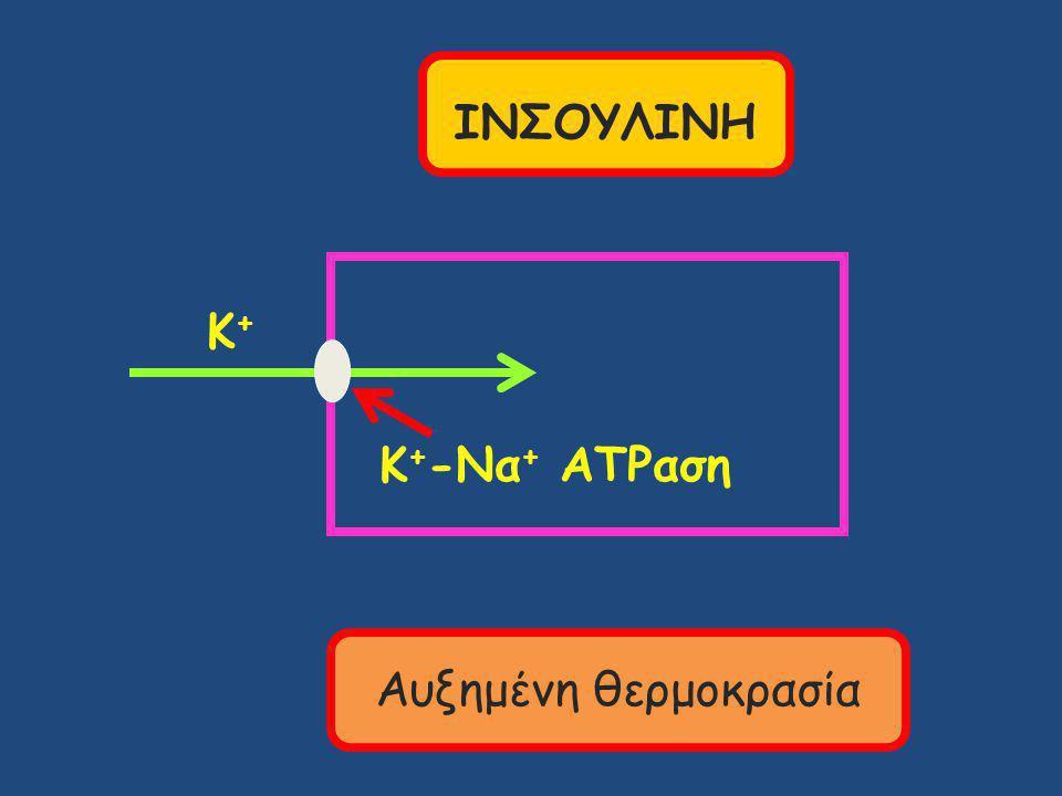 Κ+Κ+ Κ + -Να + ATPαση ΙΝΣΟΥΛΙΝΗ Αυξημένη θερμοκρασία