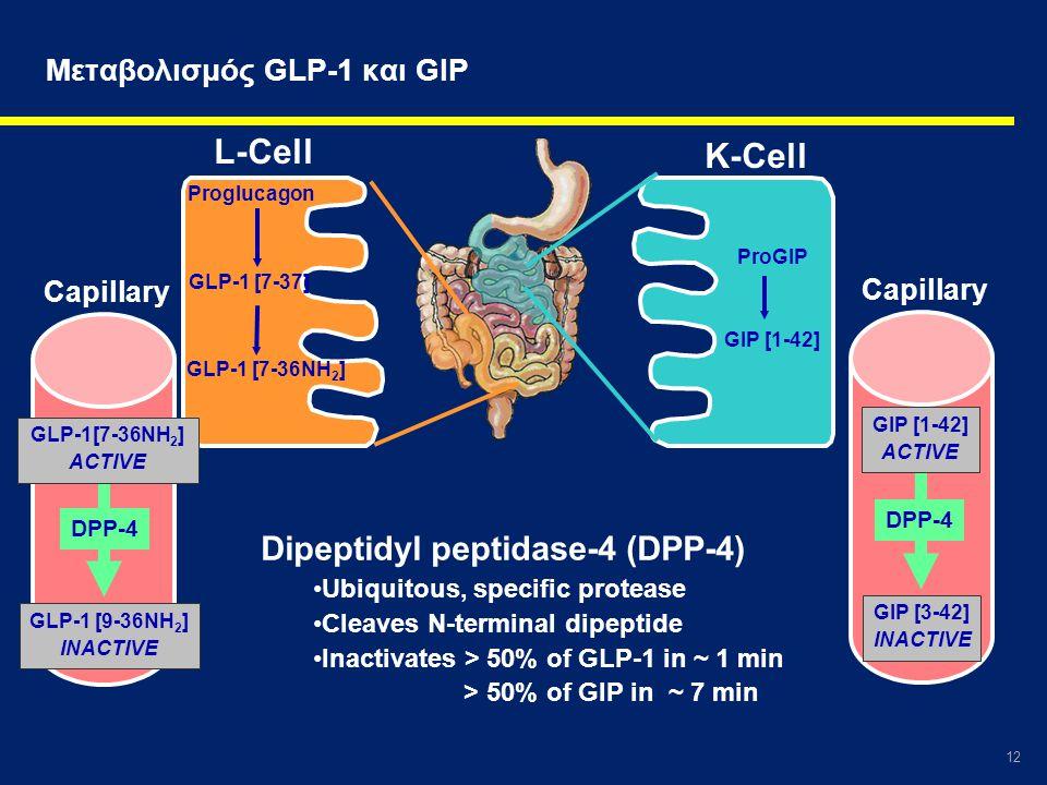 12 Μεταβολισμός GLP-1 και GIP Capillary K-Cell L-Cell GIP [3-42] INACTIVE DPP-4 GIP [1-42] ACTIVE GLP-1[7-36NH 2 ] ACTIVE GLP-1 [9-36NH 2 ] INACTIVE D