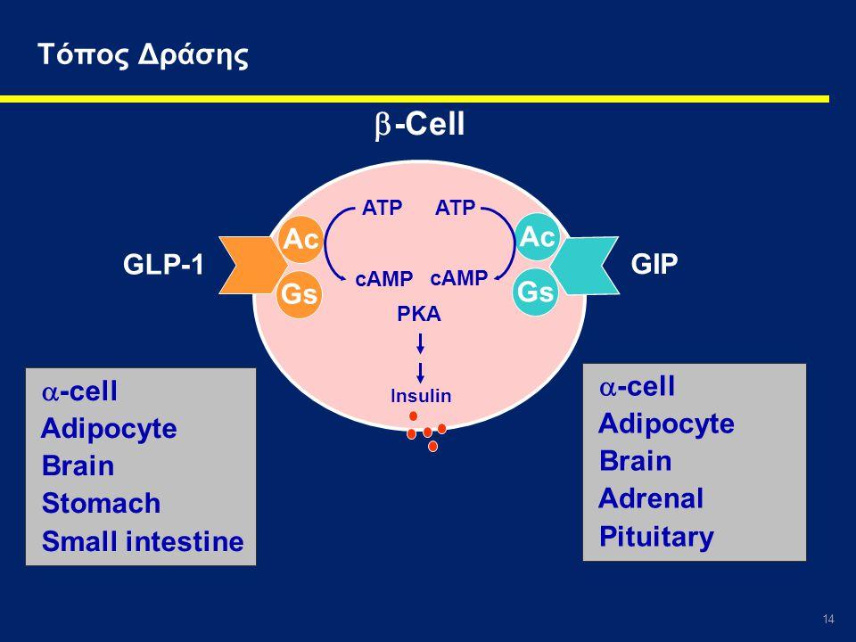 14 Τόπος Δράσης Gs Ac ATP cAMP Gs Ac ATP cAMP PKA Insulin  -Cell  -cell Adipocyte Brain Stomach Small intestine  -cell Adipocyte Brain Adrenal Pitu