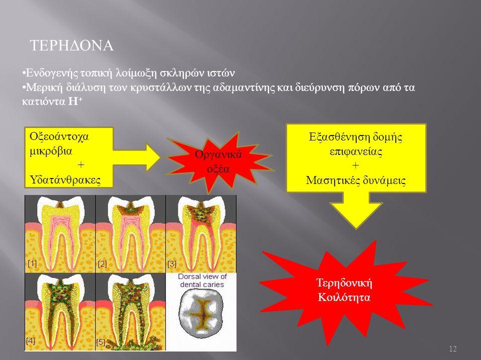 12 ΤΕΡΗΔΟΝΑ Ενδογενής τοπική λοίμωξη σκληρών ιστών Μερική διάλυση των κρυστάλλων της αδαμαντίνης και διεύρυνση πόρων από τα κατιόντα H + Οξεοάντοχα μικρόβια + Υδατάνθρακες Οργανικά οξέα Εξασθένηση δομής επιφανείας + Μασητικές δυνάμεις Τερηδονική Κοιλότητα