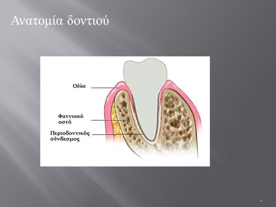 5 Αδαμαντίνη ( σμάλτο ) ΣΚΛΗΡΗ : 5 μονάδες Mohs, όταν το διαμάντι έχει 10 (Staines &Co) Η σκληρότερη ουσία του ανθρώπινου σώματος .