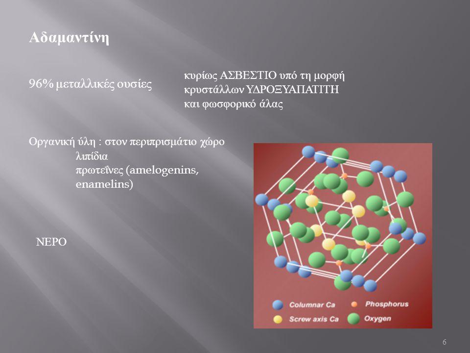 6 Αδαμαντίνη 96% μεταλλικές ουσίες κυρίως ΑΣΒΕΣΤΙΟ υπό τη μορφή κρυστάλλων ΥΔΡΟΞΥΑΠΑΤΙΤΗ και φωσφορικό άλας ΝΕΡΟ Οργανική ύλη : στον περιπρισμάτιο χώρο λιπίδια πρωτεΐνες (amelogenins, enamelins)