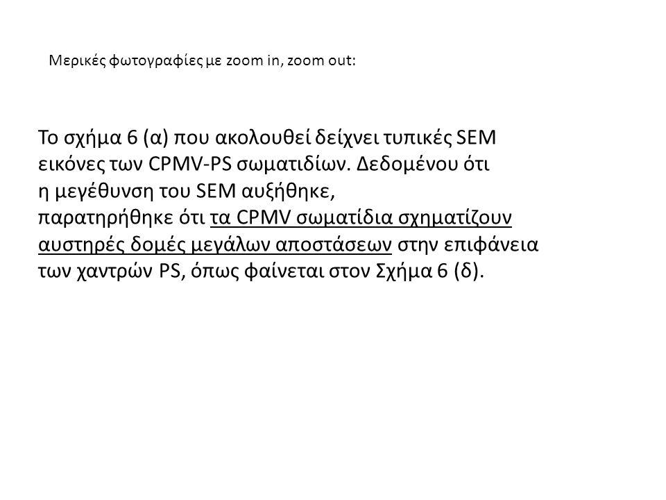 Μερικές φωτογραφίες με zoom in, zoom out: Το σχήμα 6 (α) που ακολουθεί δείχνει τυπικές SEM εικόνες των CPMV-PS σωματιδίων. Δεδομένου ότι η μεγέθυνση τ