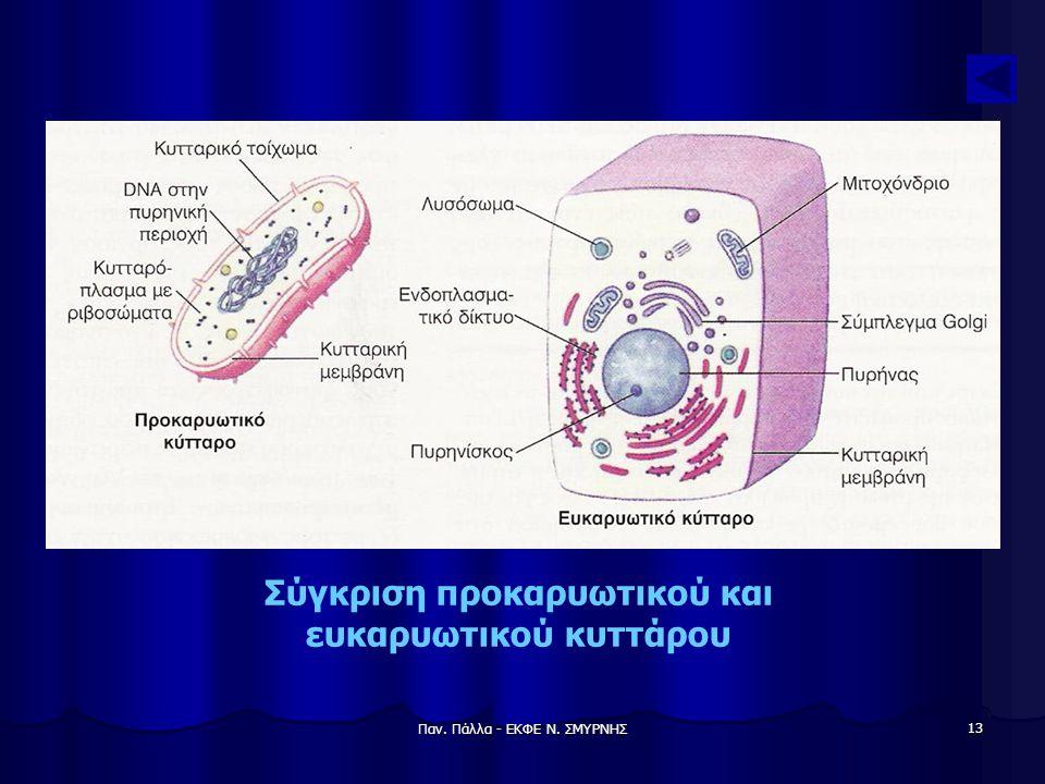Παν. Πάλλα - ΕΚΦΕ Ν. ΣΜΥΡΝΗΣ 13 Σύγκριση προκαρυωτικού και ευκαρυωτικού κυττάρου