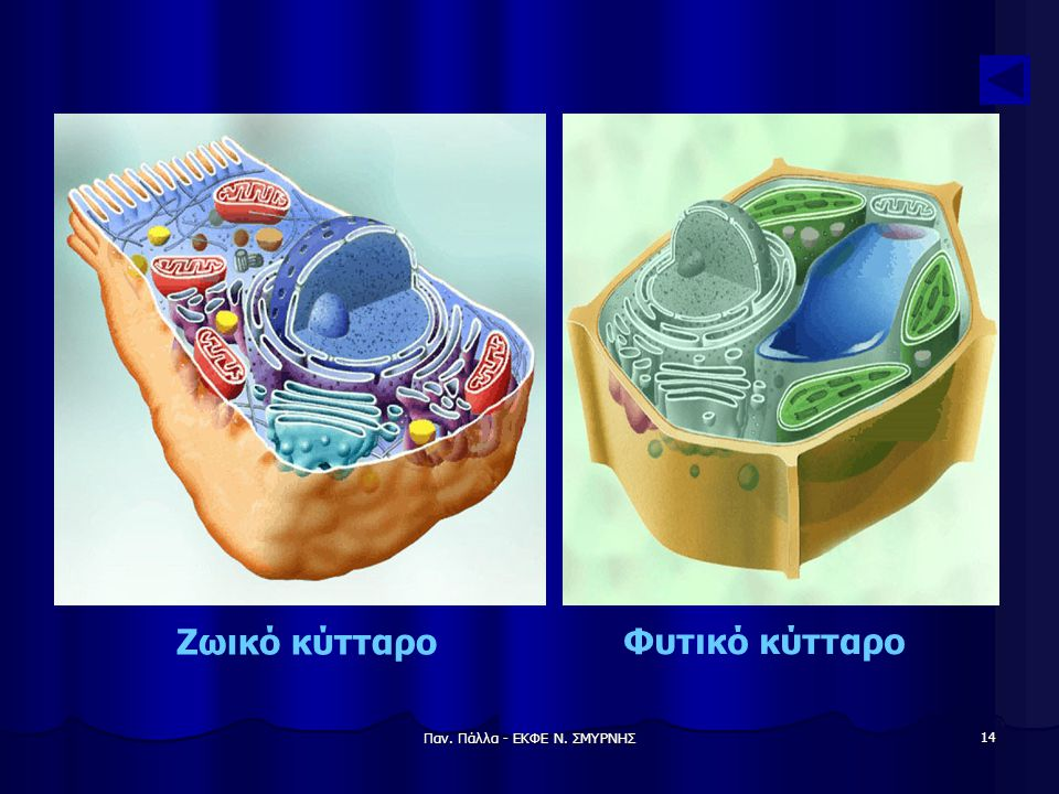 Παν. Πάλλα - ΕΚΦΕ Ν. ΣΜΥΡΝΗΣ 14 Ζωικό κύτταρο Φυτικό κύτταρο