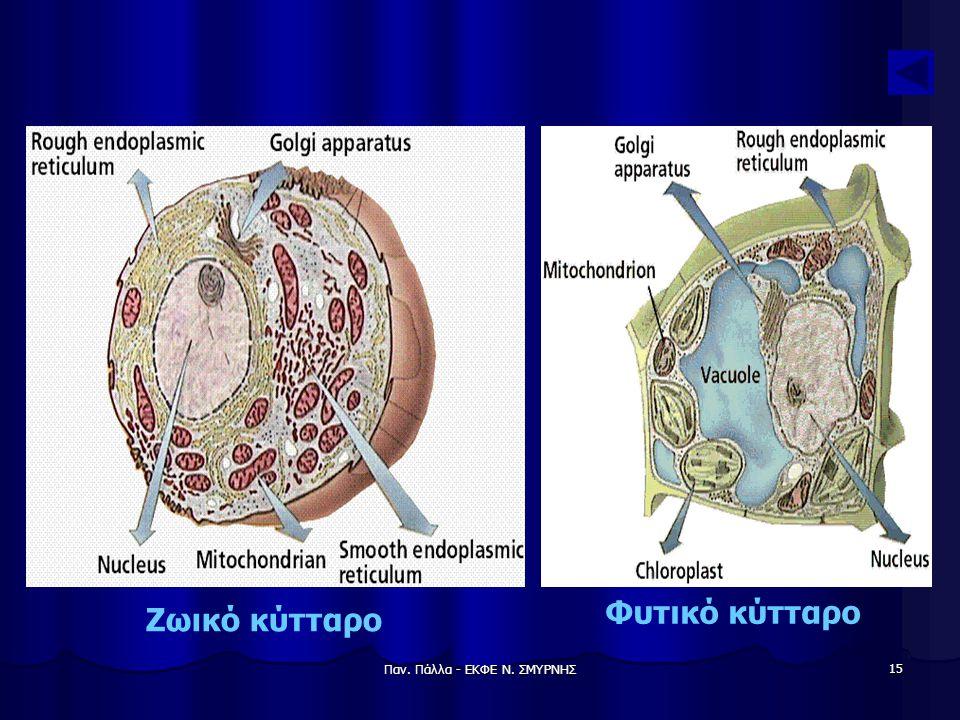 Παν. Πάλλα - ΕΚΦΕ Ν. ΣΜΥΡΝΗΣ 15 Ζωικό κύτταρο Φυτικό κύτταρο