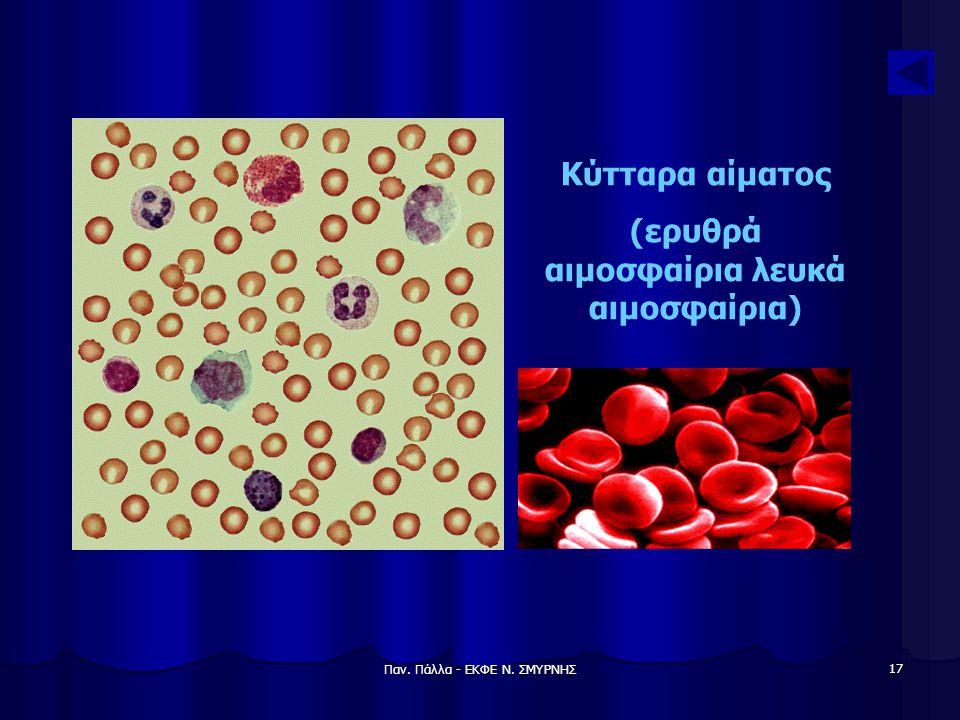 Παν. Πάλλα - ΕΚΦΕ Ν. ΣΜΥΡΝΗΣ 17 Κύτταρα αίματος (ερυθρά αιμοσφαίρια λευκά αιμοσφαίρια)