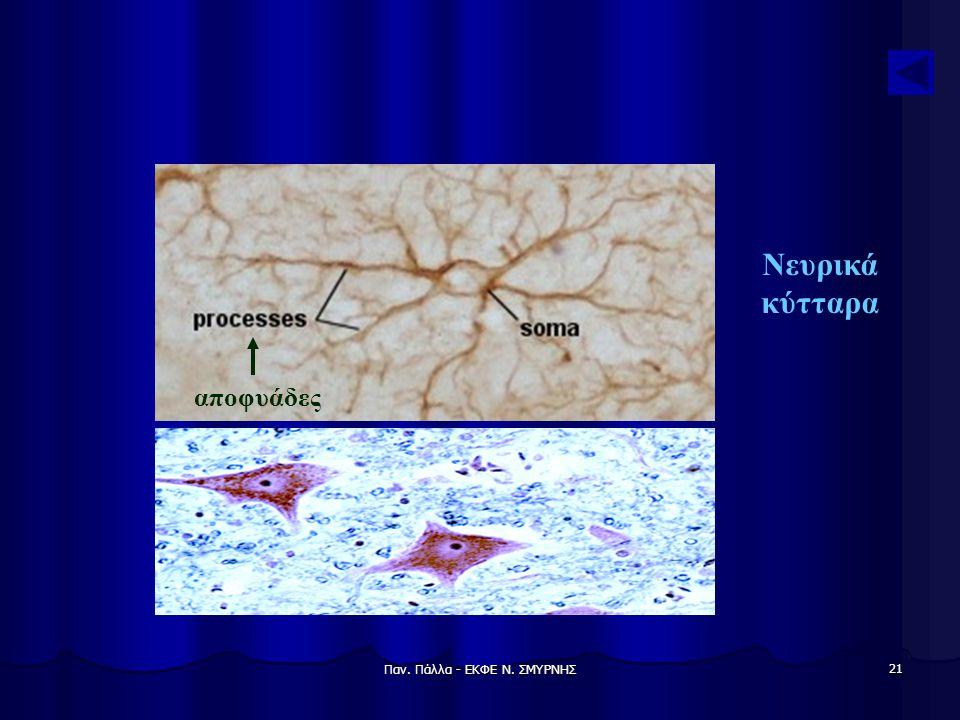 Παν. Πάλλα - ΕΚΦΕ Ν. ΣΜΥΡΝΗΣ 21 Νευρικά κύτταρα αποφυάδες