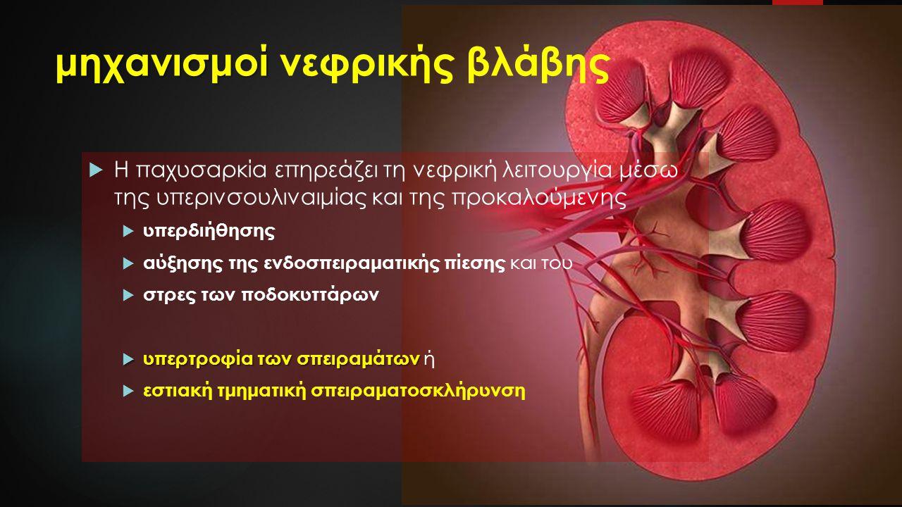 μηχανισμοί μηχανισμοί νεφρικής βλάβης  Η παχυσαρκία επηρεάζει τη νεφρική λειτουργία μέσω της υπερινσουλιναιμίας και της προκαλούμενης  υπερδιήθησης  αύξησης της ενδοσπειραματικής πίεσης και του  στρες των ποδοκυττάρων  υπερτροφία των σπειραμάτων  υπερτροφία των σπειραμάτων ή  εστιακή τμηματική σπειραματοσκλήρυνση
