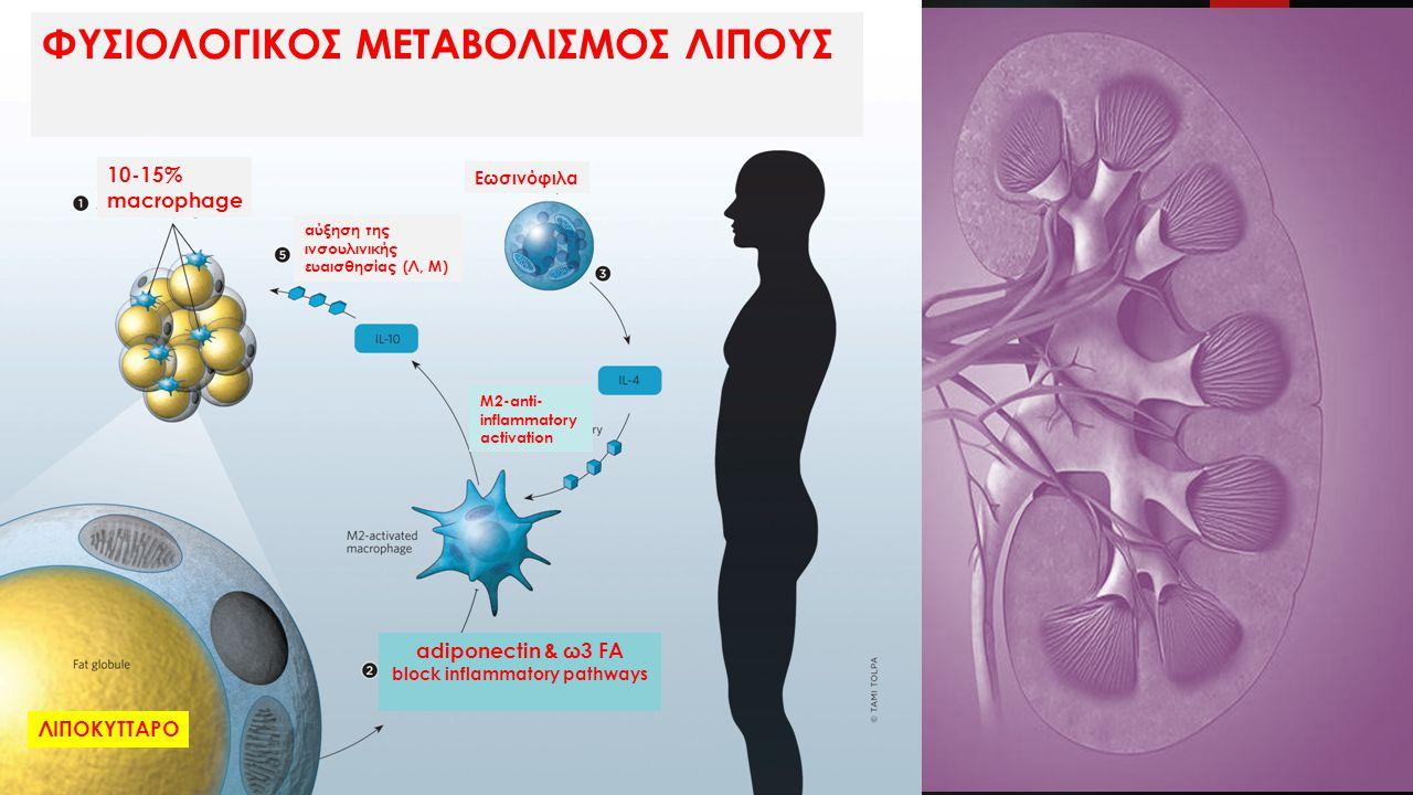 10-15% macrophage adiponectin & ω3 FA block inflammatory pathways Μ2-anti- inflammatory activation Εωσινόφιλα αύξηση της ινσουλινικής ευαισθησίας (Λ, Μ) ΦΥΣΙΟΛΟΓΙΚΟΣ ΜΕΤΑΒΟΛΙΣΜΟΣ ΛΙΠΟΥΣ ΛΙΠΟΚΥΤΤΑΡΟ