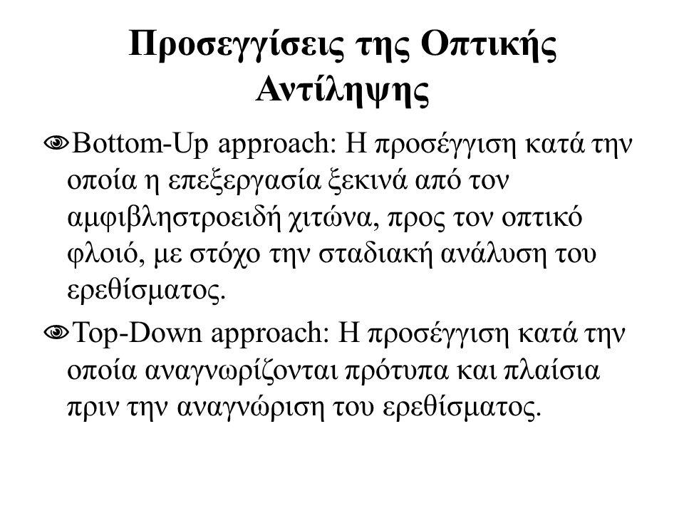 Προσεγγίσεις της Οπτικής Αντίληψης  Bottom-Up approach: H προσέγγιση κατά την οποία η επεξεργασία ξεκινά από τον αμφιβληστροειδή χιτώνα, προς τον οπτ