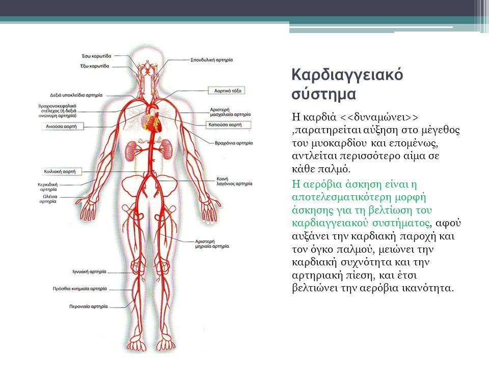 Η καρδιά Η καρδιά είναι και αυτή ένας μυς. Είναι μια ισχυρή μυϊκή αντλία που εξασφαλίζει την κυκλοφορία του αίματος στον οργανισμό.Η καρδιά είναι το κ