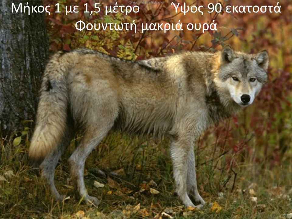 Χάρτης εξάπλωσης του λύκου στην Ελλάδα