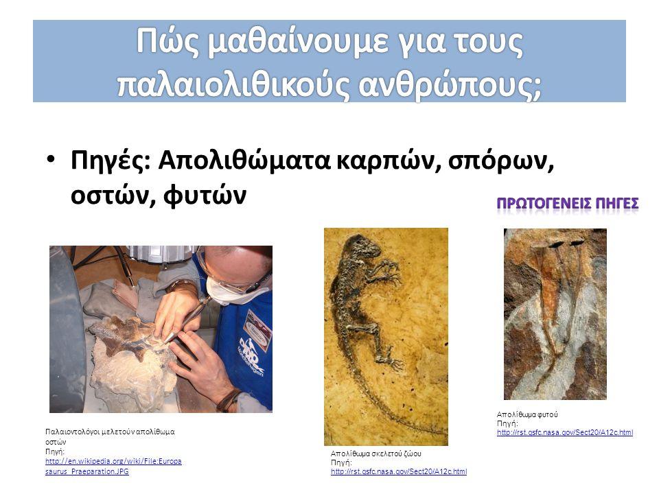 Πηγές: Aπολιθώματα καρπών, σπόρων, οστών, φυτών Παλαιοντολόγοι μελετούν απολίθωμα οστών Πηγή: http://en.wikipedia.org/wiki/File:Europa saurus_Praepara