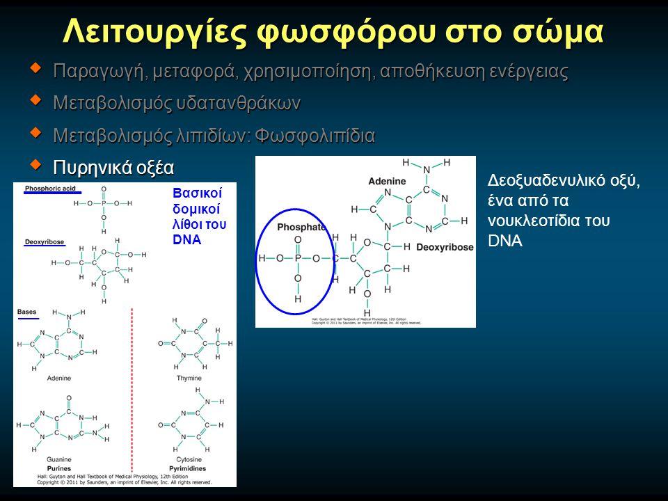 Λειτουργίες φωσφόρου στο σώμα  Παραγωγή, μεταφορά, χρησιμοποίηση, αποθήκευση ενέργειας  Μεταβολισμός υδατανθράκων  Μεταβολισμός λιπιδίων: Φωσφολιπίδια  Πυρηνικά οξέα Βασικοί δομικοί λίθοι του DNA Δεοξυαδενυλικό οξύ, ένα από τα νουκλεοτίδια του DNA