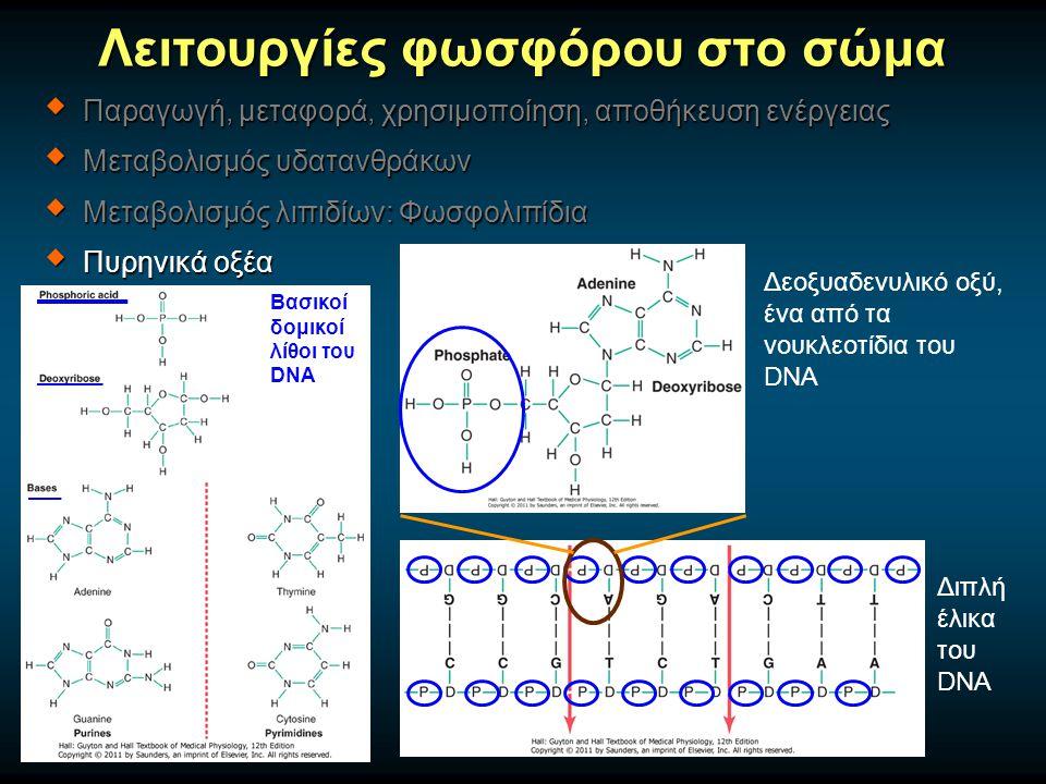 Λειτουργίες φωσφόρου στο σώμα  Παραγωγή, μεταφορά, χρησιμοποίηση, αποθήκευση ενέργειας  Μεταβολισμός υδατανθράκων  Μεταβολισμός λιπιδίων: Φωσφολιπίδια  Πυρηνικά οξέα Βασικοί δομικοί λίθοι του DNA Δεοξυαδενυλικό οξύ, ένα από τα νουκλεοτίδια του DNA Διπλή έλικα του DNA