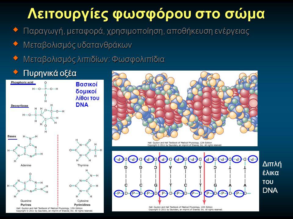 Λειτουργίες φωσφόρου στο σώμα  Παραγωγή, μεταφορά, χρησιμοποίηση, αποθήκευση ενέργειας  Μεταβολισμός υδατανθράκων  Μεταβολισμός λιπιδίων: Φωσφολιπίδια  Πυρηνικά οξέα Βασικοί δομικοί λίθοι του DNA Διπλή έλικα του DNA