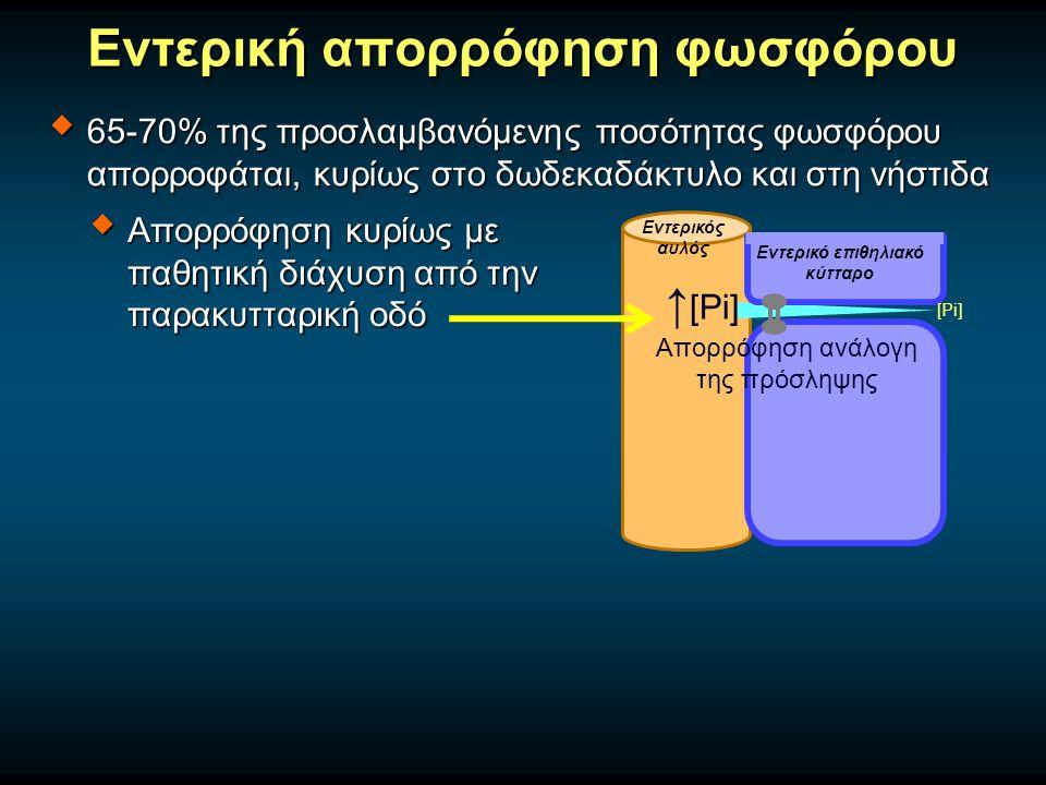 Εντερική απορρόφηση φωσφόρου  65-70% της προσλαμβανόμενης ποσότητας φωσφόρου απορροφάται, κυρίως στο δωδεκαδάκτυλο και στη νήστιδα  Απορρόφηση κυρίως με παθητική διάχυση από την παρακυτταρική οδό Εντερικός αυλός [Pi] ↑ [Pi] Εντερικό επιθηλιακό κύτταρο Απορρόφηση ανάλογη της πρόσληψης