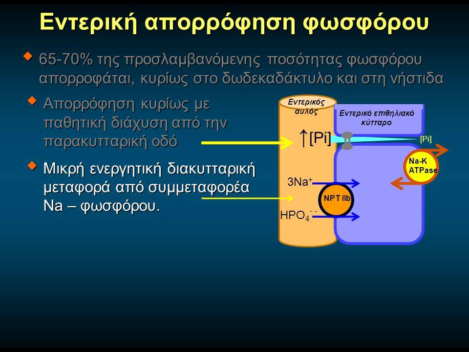 Εντερική απορρόφηση φωσφόρου  65-70% της προσλαμβανόμενης ποσότητας φωσφόρου απορροφάται, κυρίως στο δωδεκαδάκτυλο και στη νήστιδα  Απορρόφηση κυρίως με παθητική διάχυση από την παρακυτταρική οδό  Μικρή ενεργητική διακυτταρική μεταφορά από συμμεταφορέα Na – φωσφόρου.