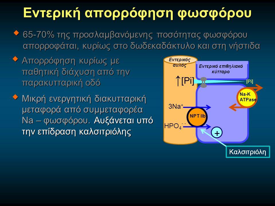 Εντερική απορρόφηση φωσφόρου  65-70% της προσλαμβανόμενης ποσότητας φωσφόρου απορροφάται, κυρίως στο δωδεκαδάκτυλο και στη νήστιδα  Απορρόφηση κυρίω