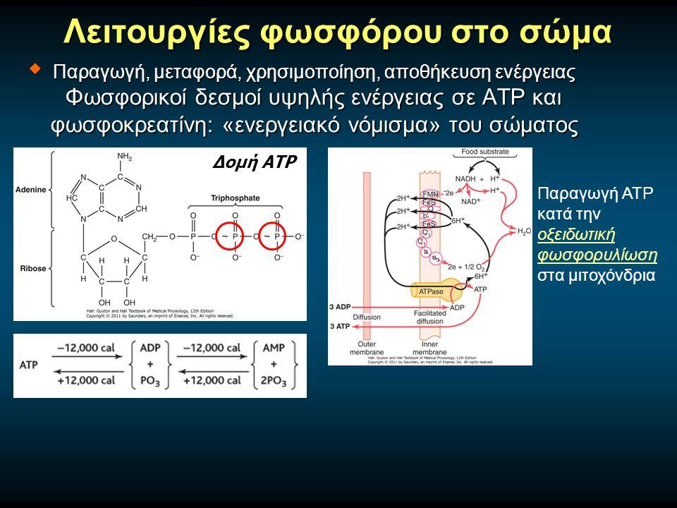 Λειτουργίες φωσφόρου στο σώμα Δομή ΑΤΡ Παραγωγή ΑΤΡ κατά την οξειδωτική φωσφορυλίωση στα μιτοχόνδρια  Παραγωγή, μεταφορά, χρησιμοποίηση, αποθήκευση ενέργειας Φωσφορικοί δεσμοί υψηλής ενέργειας σε ATP και φωσφοκρεατίνη: «ενεργειακό νόμισμα» του σώματος