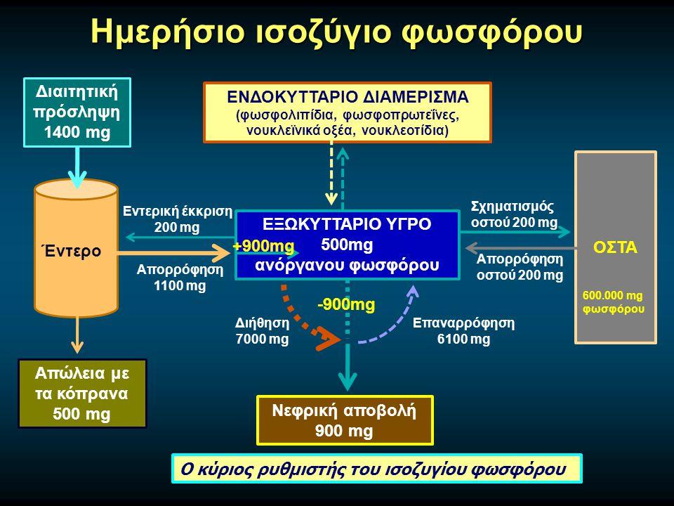 Ημερήσιο ισοζύγιο φωσφόρου Διαιτητική πρόσληψη 1400 mg Έντερο Απώλεια με τα κόπρανα 500 mg ΕΞΩΚΥΤΤΑΡΙΟ ΥΓΡΟ 500mg ανόργανου φωσφόρου ΕΝΔΟΚΥΤΤΑΡΙΟ ΔΙΑΜΕΡΙΣΜΑ (φωσφολιπίδια, φωσφοπρωτεΐνες, νουκλεϊνικά οξέα, νουκλεοτίδια) ΟΣΤΑ Σχηματισμός οστού 200 mg Απορρόφηση οστού 200 mg Απορρόφηση 1100 mg Εντερική έκκριση 200 mg Νεφρική αποβολή 900 mg Επαναρρόφηση 6100 mg Διήθηση 7000 mg +900mg Ο κύριος ρυθμιστής του ισοζυγίου φωσφόρου 600.000 mg φωσφόρου -900mg