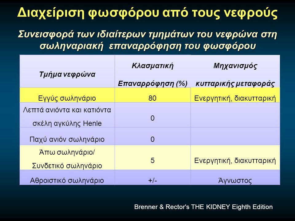 Διαχείριση φωσφόρου από τους νεφρούς Συνεισφορά των ιδιαίτερων τμημάτων του νεφρώνα στη σωληναριακή επαναρρόφηση του φωσφόρου Brenner & Rector s THE KIDNEY Eighth Edition
