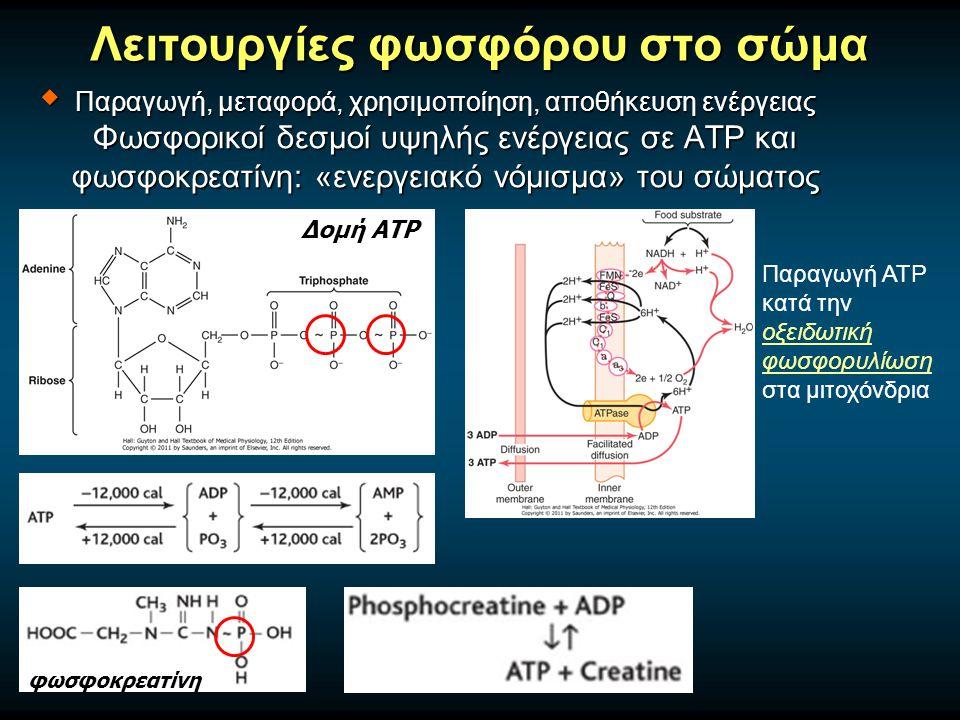 Λειτουργίες φωσφόρου στο σώμα Δομή ΑΤΡ Παραγωγή ΑΤΡ κατά την οξειδωτική φωσφορυλίωση στα μιτοχόνδρια φωσφοκρεατίνη  Παραγωγή, μεταφορά, χρησιμοποίηση, αποθήκευση ενέργειας Φωσφορικοί δεσμοί υψηλής ενέργειας σε ATP και φωσφοκρεατίνη: «ενεργειακό νόμισμα» του σώματος