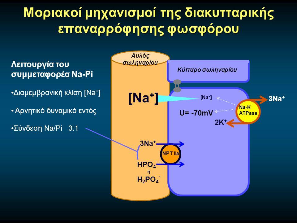 Μοριακοί μηχανισμοί της διακυτταρικής επαναρρόφησης φωσφόρου Αυλός σωληναρίου Κύτταρο σωληναρίου Na-K ATPase 3Na + 2Κ + NPT IIa 3Na + HPO 4 - - ή H 2 PO 4 - Λειτουργία του συμμεταφορέα Na-Pi Διαμεμβρανική κλίση [Na + ] Αρνητικό δυναμικό εντός Σύνδεση Na/Pi 3:1 [Na + ] U= -70mV
