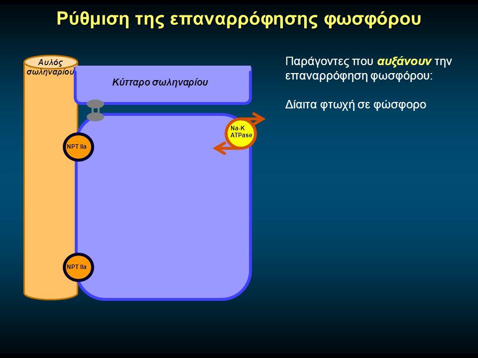 Ρύθμιση της επαναρρόφησης φωσφόρου Αυλός σωληναρίου Κύτταρο σωληναρίου Na-K ATPase Παράγοντες που αυξάνουν την επαναρρόφηση φωσφόρου: Δίαιτα φτωχή σε φώσφορο NPT IIa