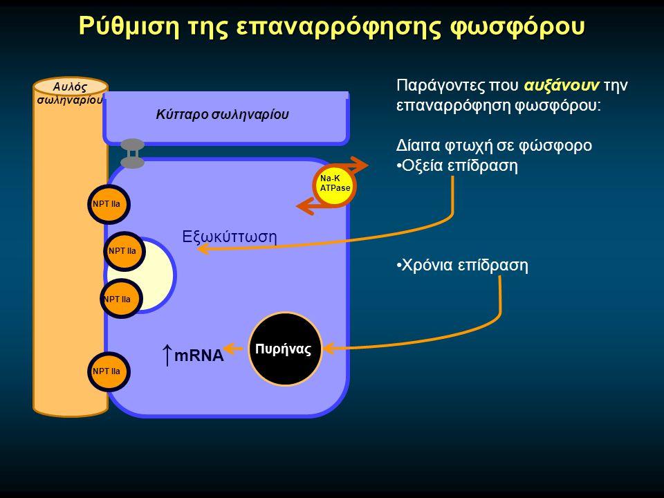 Παράγοντες που αυξάνουν την επαναρρόφηση φωσφόρου: Δίαιτα φτωχή σε φώσφορο Οξεία επίδραση Χρόνια επίδραση Ρύθμιση της επαναρρόφησης φωσφόρου Αυλός σωληναρίου Κύτταρο σωληναρίου Na-K ATPase NPT IIa Εξωκύττωση Πυρήνας ↑ mRNA