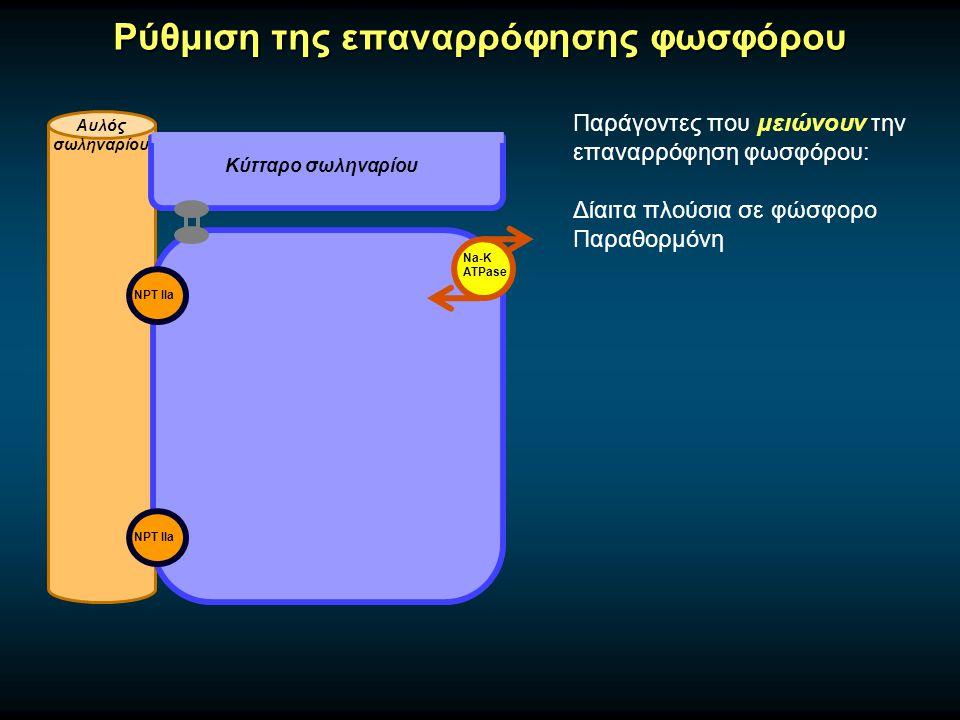 Ρύθμιση της επαναρρόφησης φωσφόρου Αυλός σωληναρίου Κύτταρο σωληναρίου Na-K ATPase Παράγοντες που μειώνουν την επαναρρόφηση φωσφόρου: Δίαιτα πλούσια σε φώσφορο Παραθορμόνη NPT IIa
