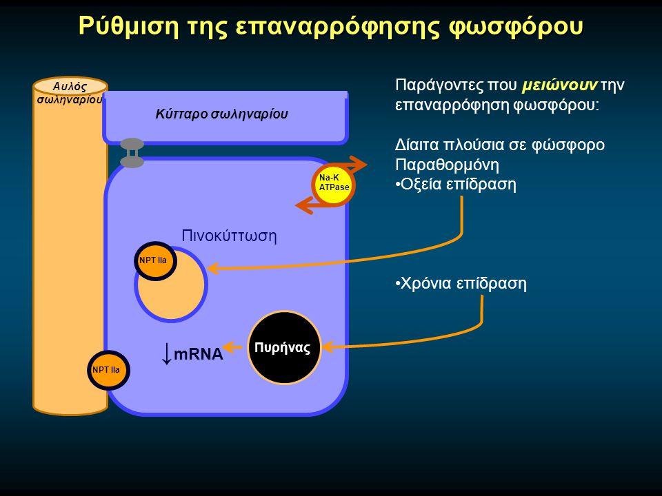 Παράγοντες που μειώνουν την επαναρρόφηση φωσφόρου: Δίαιτα πλούσια σε φώσφορο Παραθορμόνη Οξεία επίδραση Χρόνια επίδραση Ρύθμιση της επαναρρόφησης φωσφόρου Αυλός σωληναρίου Κύτταρο σωληναρίου Na-K ATPase NPT IIa Πινοκύττωση Πυρήνας ↓ mRNA