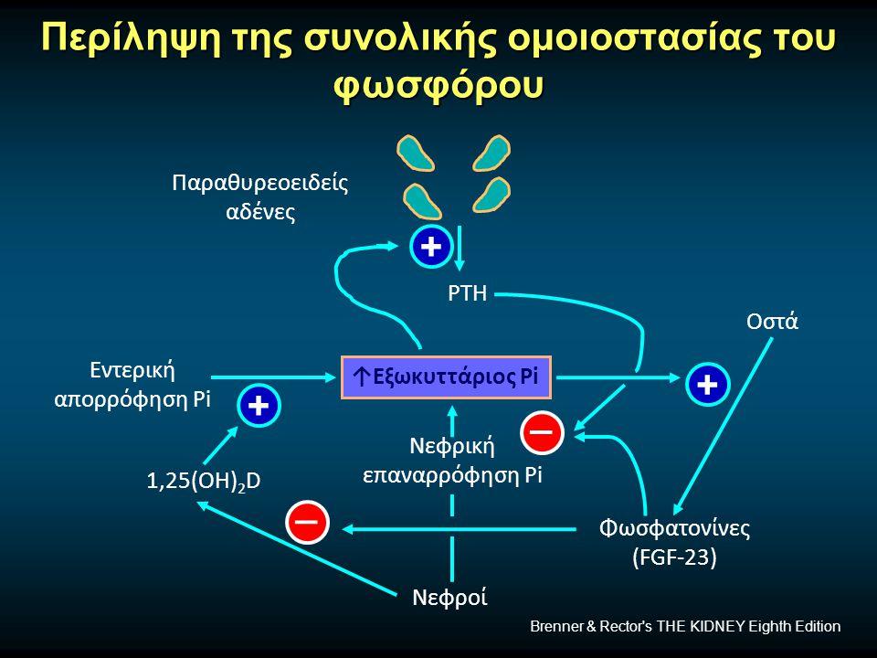 Περίληψη της συνολικής ομοιοστασίας του φωσφόρου Παραθυρεοειδείς αδένες ↑Εξωκυττάριος Pi Οστά Φωσφατονίνες (FGF-23) Νεφροί 1,25(OH) 2 D Εντερική απορρόφηση Pi Νεφρική επαναρρόφηση Pi PTH + + + _ _ Brenner & Rector s THE KIDNEY Eighth Edition