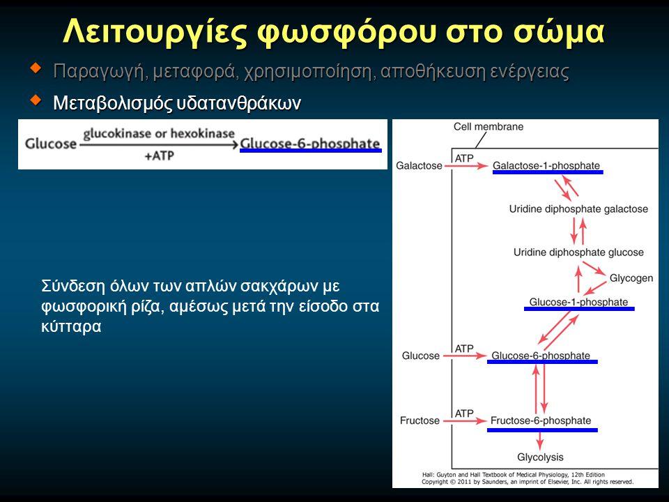 Λειτουργίες φωσφόρου στο σώμα  Παραγωγή, μεταφορά, χρησιμοποίηση, αποθήκευση ενέργειας  Μεταβολισμός υδατανθράκων Σύνδεση όλων των απλών σακχάρων με φωσφορική ρίζα, αμέσως μετά την είσοδο στα κύτταρα