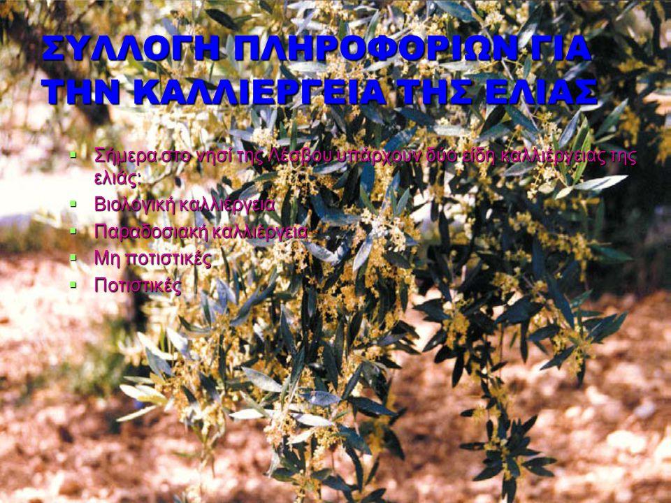 ΣΥΛΛΟΓΗ ΠΛΗΡΟΦΟΡΙΩΝ ΓΙΑ ΤΗΝ ΚΑΛΛΙΕΡΓΕΙΑ ΤΗΣ ΕΛΙΑΣ  Σήμερα στο νησί της Λέσβου υπάρχουν δύο είδη καλλιέργειας της ελιάς:  Βιολογική καλλιέργεια  Παρ
