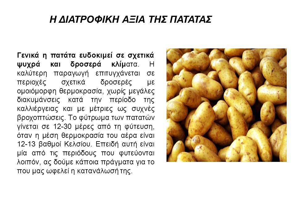 Η ΔΙΑΤΡΟΦΙΚΗ ΑΞΙΑ ΤΗΣ ΠΑΤΑΤΑΣ Γενικά η πατάτα ευδοκιμεί σε σχετικά ψυχρά και δροσερά κλίματα. H καλύτερη παραγωγή επιτυγχάνεται σε περιοχές σχετικά δρ